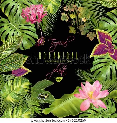 vector tropical plants frame