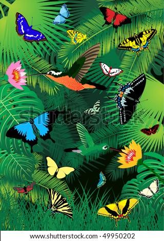Tropical Rainforest Birds on Vector   Vector Tropical Rainforest With Humming Birds And Butterflies