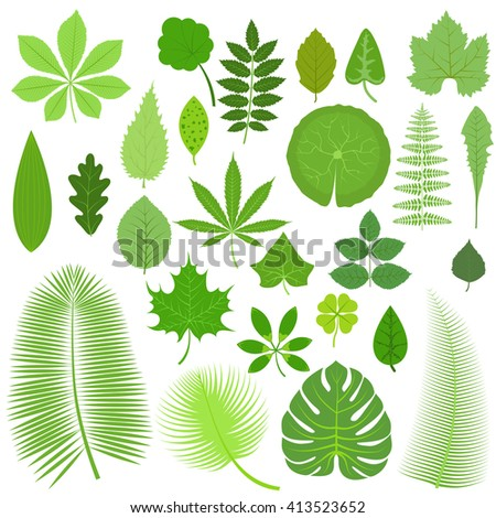 vector tropical set leaves
