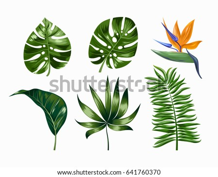 Vector tropical trendy summer palm leaves and flower, jungle leaves, split leaf, philodendron leaves isolated on white background. EPS 10
