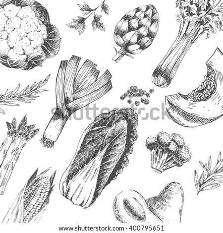 vector vegetable hand drawn collection - cabbage, asparagus, pumpkin, broccoli, leek, artichoke, avocado, corn. vegetable sketch. vegetable elements. fresh vegetables
