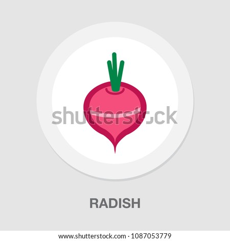 vector vegetable radish -  fresh nature healthy illustration symbol isolated
