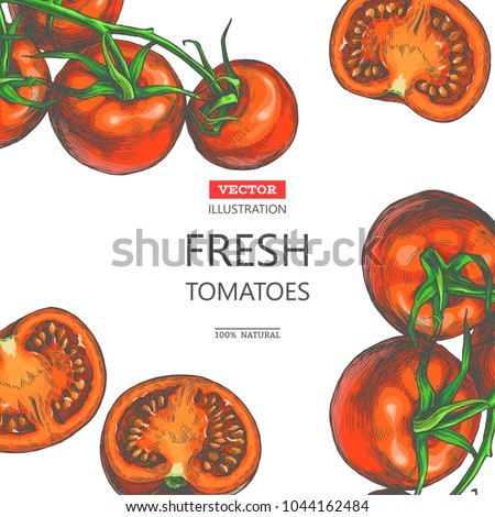 Vector vintage botanical color background with fresh vegetables isolated on white. Card template with hand drawn red tomatoes on vine and halfs in engraving style.