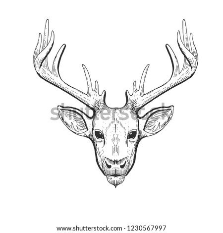 Vector vintage deer head in engraving, scratchboard style. Hand drawn illustration with animal portrait isolated on white background