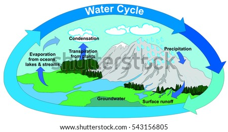Water cycle diagram download free vector art stock graphics images vector water cycle in nature with all part precipitation surface runoff groundwater evaporation transpiration condensation clouds ccuart Image collections