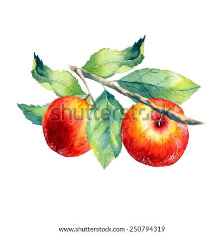 vector watercolor fruit apple