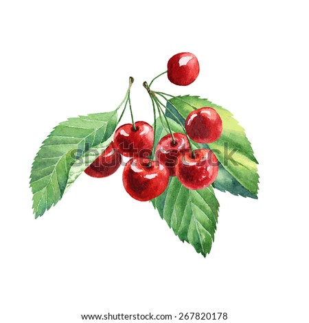 vector watercolor fruit cherry