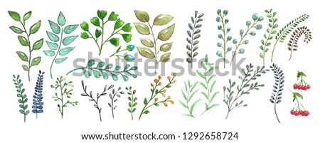Vector watercolor illustration. Botanical set clipart. Hand drawn leaves, branches and herbs  for decoration,  invitation, wedding or postcard.