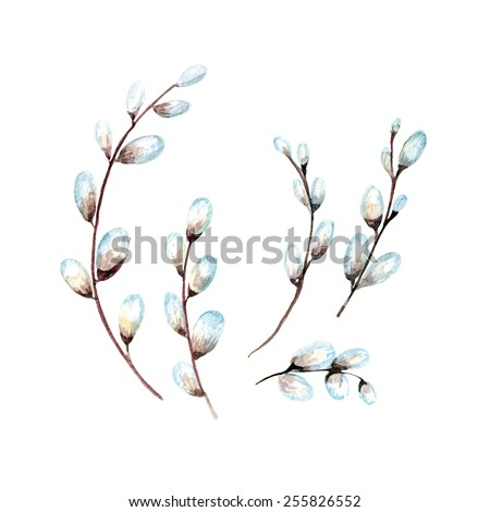vector watercolor pussy willow