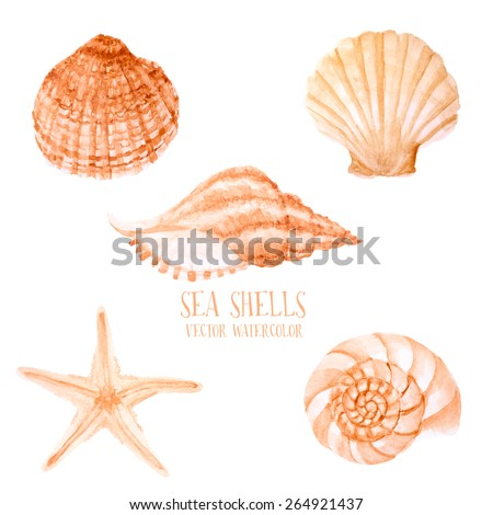 vector watercolor sea shells