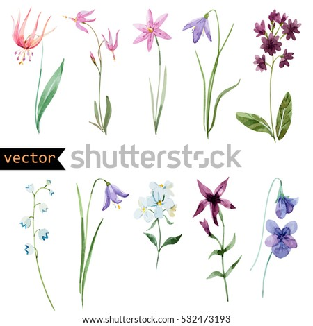 Vector Watercolour set of flowers, spring plants isolated on white background