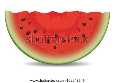 vector watermelon slice