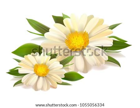 vector white chamomile flower