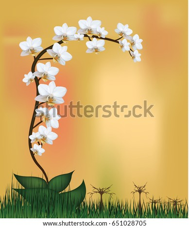 vector  white orchid plant
