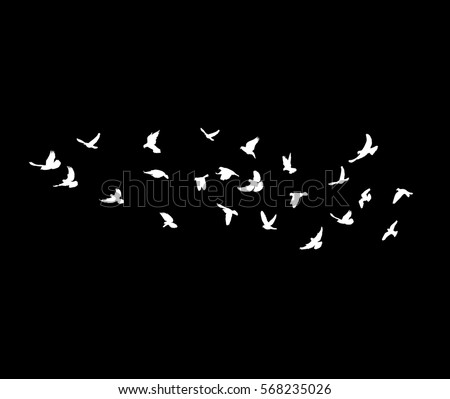 vector, white silhouette flying birds on a black background
