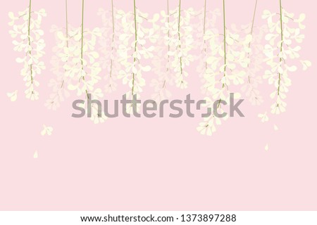 vector white wisteria on pink