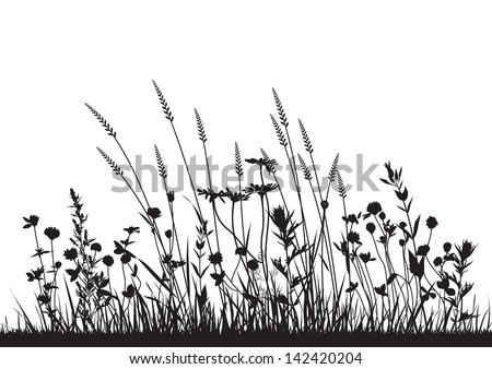 vector wild herbs and flowers