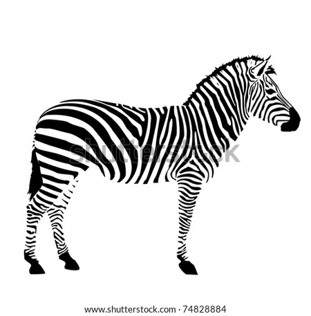 Zebra head download free vector art stock graphics images vector zebra on white background illustration pattern background zebras skins and heads pronofoot35fo Gallery