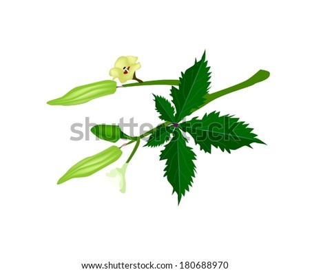 vegetable and herb  vector