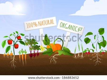 vegetable food garden poster of