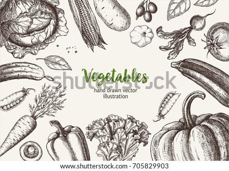 Vegetable frame. Hand drawn vector illustrations