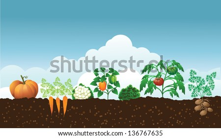 Vegetable garden. EPS 10 vector, grouped for easy editing. No open shapes or paths.