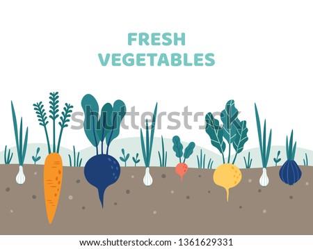 Vegetable garden. Gardening vegetables food, potatoes gardens and summer gardeners. Gardener vegetable plants grow or growing organic veggies roots vector illustration #1361629331