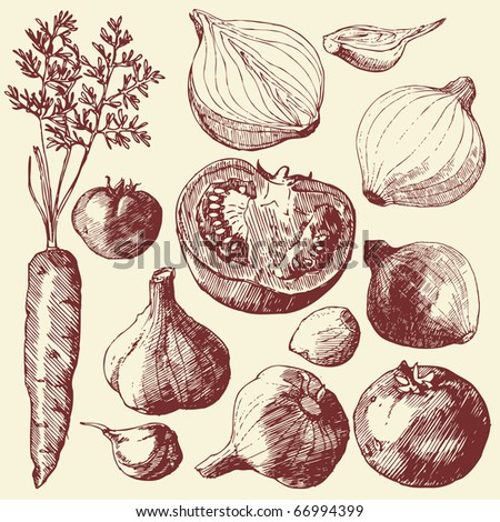 Vegetable set: hand drawn carrot, tomatoes, garlic and onions. - stock vector