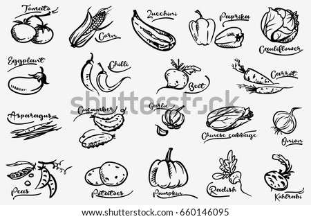 Vegetable set. Hand drawn doodle  collection. Vector. Corn, onion, pepper, peas, chili, cauliflower, zucchini, tomato, pumpkin, beet, carrot, potatoes, cabbage, asparagus, kohlrabi, garlic, squash