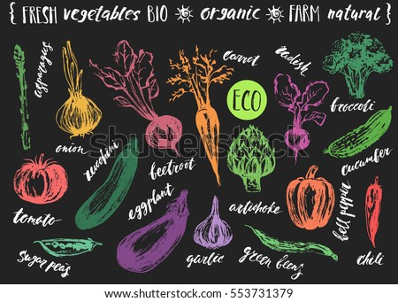 Vegetable sketch with lettering. Artichoke, asparagus, garlic, tomato, pepper, cucumber, carrot, onion, chili, beet, broccoli, radish, eggplant, zucchini, green beans.