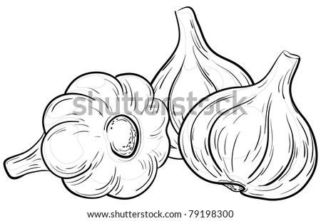 Vegetable, spice, three garlics, vector, monochrome contour on white