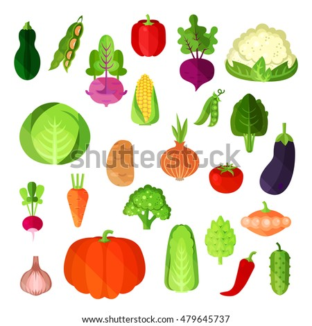 Vegetable summer harvest, vegan food collection. Potato and napa cabbage, capsicum annuum or bell and red pepper, cauliflower and cucumber, corn and pumpkin, eggplant and radish, onion and patty pan #479645737