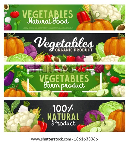 Vegetables and farm veggies, food harvest products, vector banners. Natural organic bio vegetables, vegetarian veggies food, avocado, zucchini squash and cabbage, garlic and pepper, corn and pumpkin