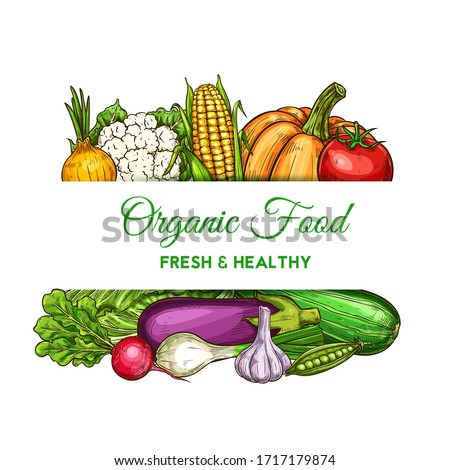 Vegetables and farm veggies, natural food and grocery store vector poster. Vegetarian corn, cauliflower and napa cabbage, zucchini squash, garlic and onion, pumpkin, eggplant and radish