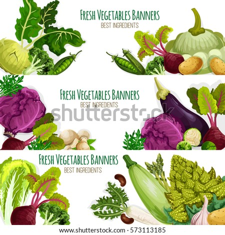 Vegetables banners st of organic veggies. Vector kohlrabi, broccoli and green pea, bean, beet, potato and zucchini, eggplant and chinese cabbage, champignons, arugula and romanesco. Farm food harvest