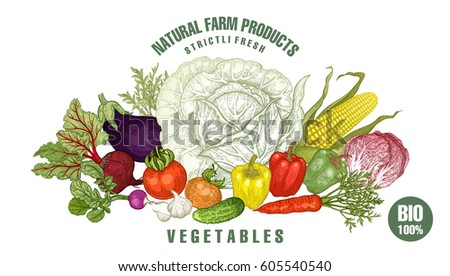 Vegetables big set. Vector illustration. Poster or sign for vegetable store, market. Hand drawing cabbage, tomato, cucumber, beetroot, corn, pepper, radish, eggplant, radish, carrot. Vintage engraving