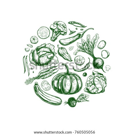 vegetables collection. vector...