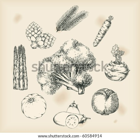 Vegetables drawings- isolated objects - stock vector