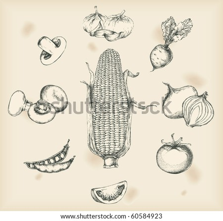 Vegetables drawings- isolated objects