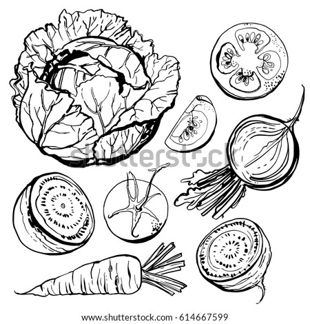 Vegetables drawn in ink on a white background. Vector sketch food. Cabbage, beet, tomato, carrot.