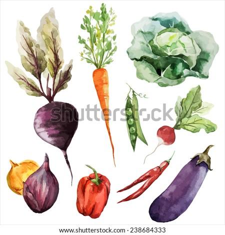 vegetables, food watercolor
