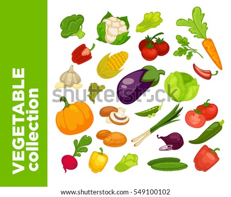 Vegetables icons set. Collection of vector vegetarian food illustration: tomato, pepper and pumpkin, cucumber, cabbage and onion, radish and carrot, eggplant, corn. Fresh healthy nutrition symbols #549100102