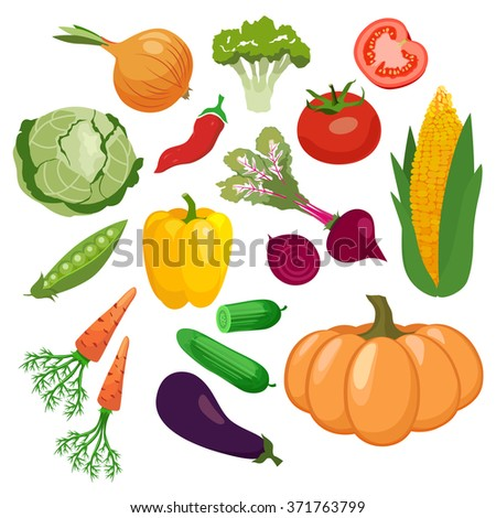 Vegetables icons set with tomato, maize, cabbage  isolated on white background.  Vector illustration #371763799