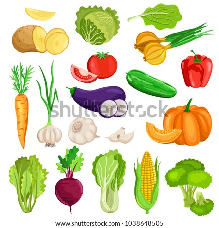 Vegetables isolated on white background. Vector harves set. #1038648505