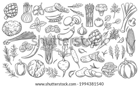 Vegetables outline vector icons set. Monochrome artichoke, leek, culinary herbs, corn, garlic, cucumber, pepper, onion, celery, asparagus, cabbage and ets. Stock photo ©