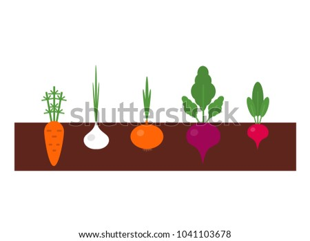 vegetables planted in the ground, beet sprouts, carrots, radishes, garlic, onions