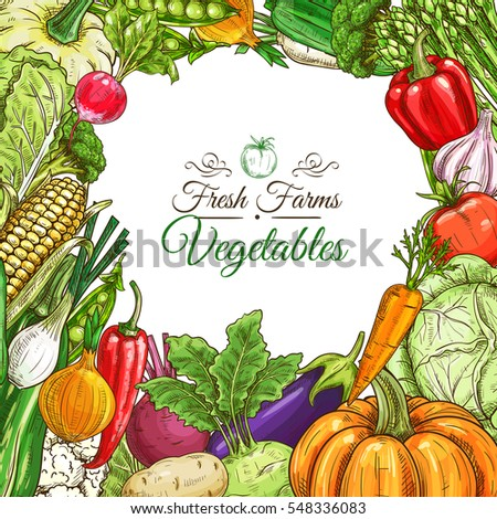 Vegetables poster or vegetarian menu design template. Fresh farm tomato, pepper, carrot, onion, garlic, pumpkin, potato, eggplant, corn, beet, zucchini, pea, cabbage, lettuce vegetable sketches