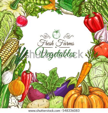 Vegetables poster or vegetarian menu design template. Fresh farm tomato, pepper, carrot, onion, garlic, pumpkin, potato, eggplant, corn, beet, zucchini, pea, cabbage, lettuce vegetable sketches