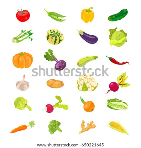Vegetables vector icons collection carrots and beets, broccoli and cabbage, radish and cucumber, garlic and onions. #650221645