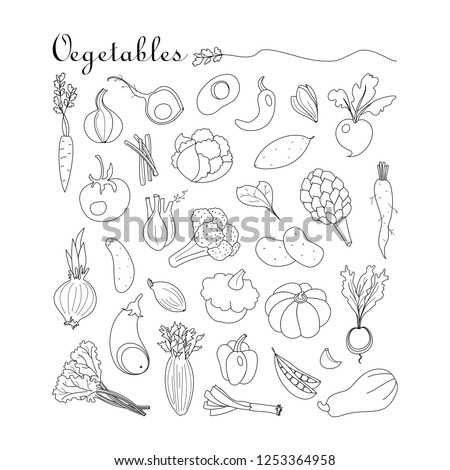 Vegetables. Vector set with hand drawn doodles on the  theme of food. Sketches for use of design. Pumpkin, broccoli, tomato, eggplant, pepper, celery,  radish, spinach, onion, garlic, zucchini. #1253364958